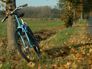 Mountainbiking Elsass